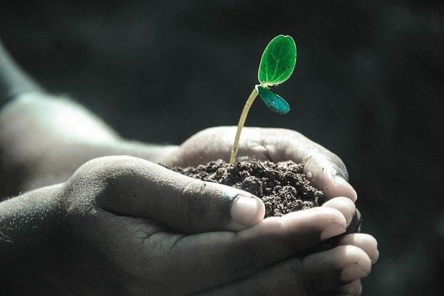 手の中の芽